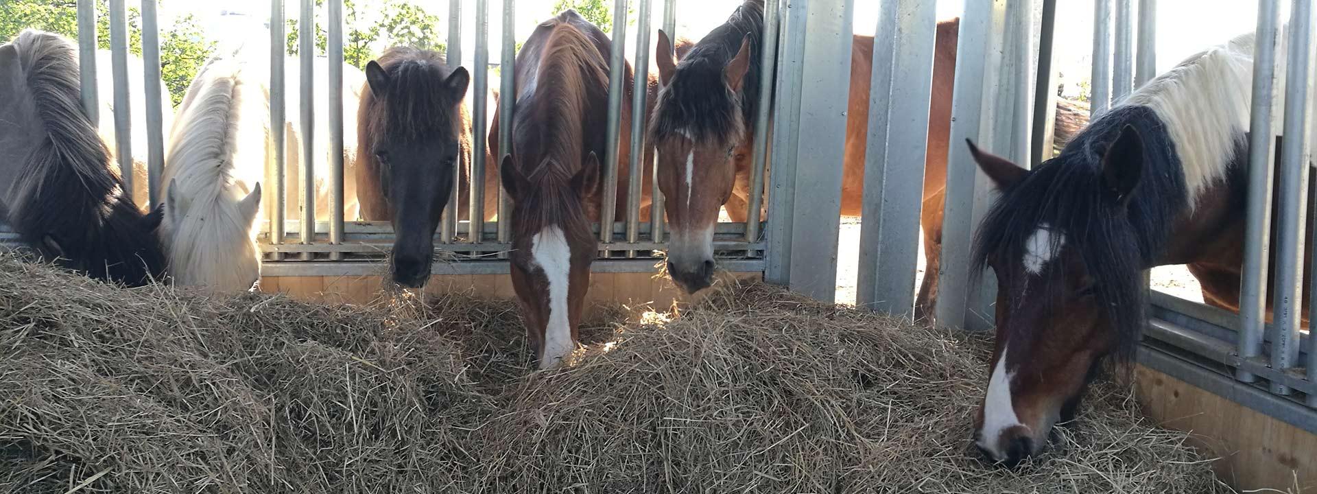 Pferdehof • Rickenbacher • Cham